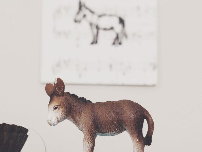 esel-donkey-baudet